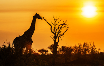10 Interesting Facts About Africa